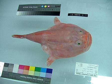 海生物008.jpg