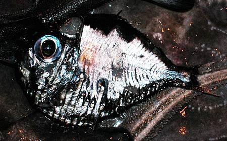 海生物010.jpg
