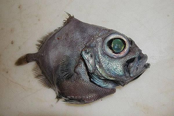 海生物017.jpg