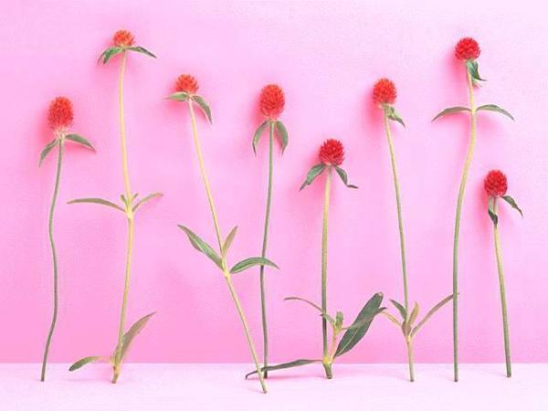 花.3.jpg