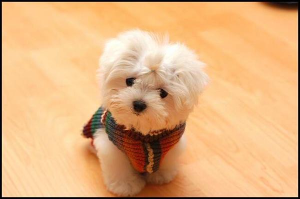 Doggie3.JPG