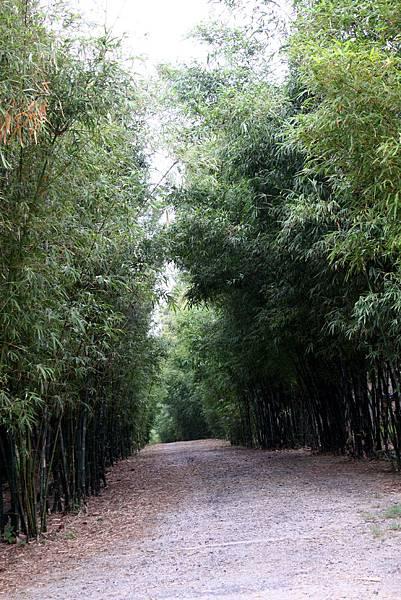 金門植物園的竹子林道