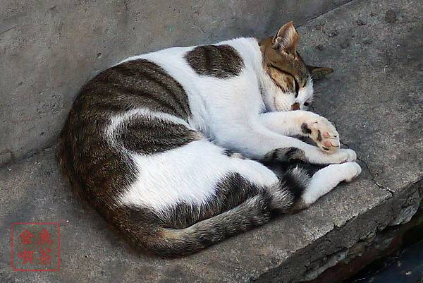 2013/811 彰化鹿港行 第二站摸乳巷旁的貓咪