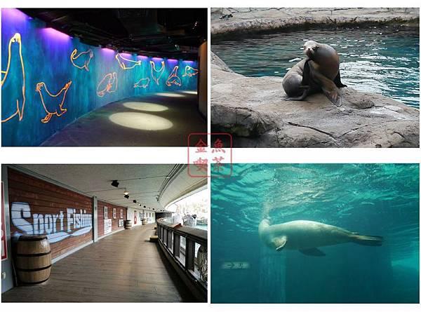海豹海獅區 有許多介紹