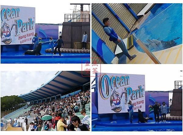 海豚海獅表演
