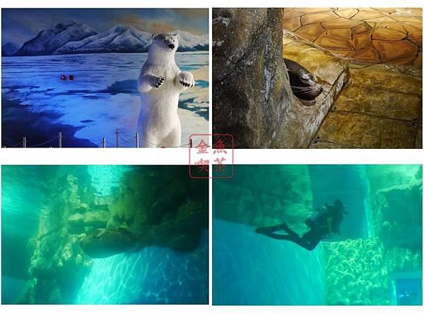 動物看多了 在水中看到有人另類的興奮(?!