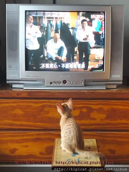 多小貓愛看電視--警匪片好緊張!