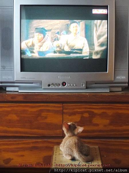 多小貓愛看電視--嗯...武俠片也不錯看!