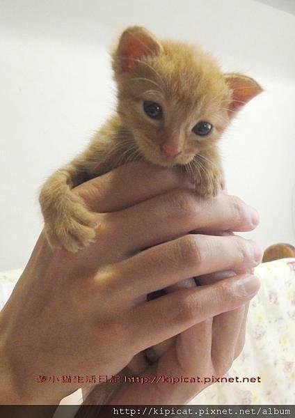 爸爸抱抱多小貓baby(多小貓生活日記)