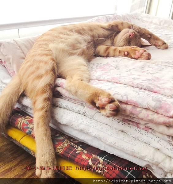 曬太陽睡大覺...嗚~~~好...好...好舒服~~~~@多小貓生活日記
