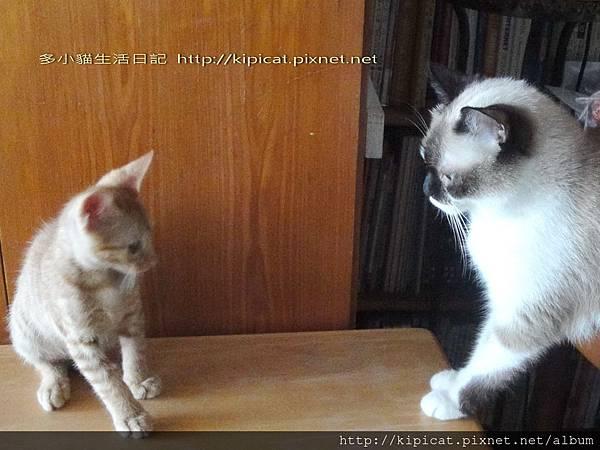 妮妮姊姊對多小貓訓話@多小貓生活日記