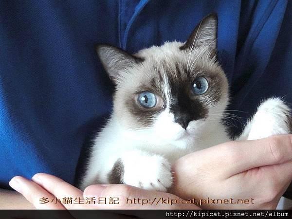 妮妮姐姐@多小貓生活日記