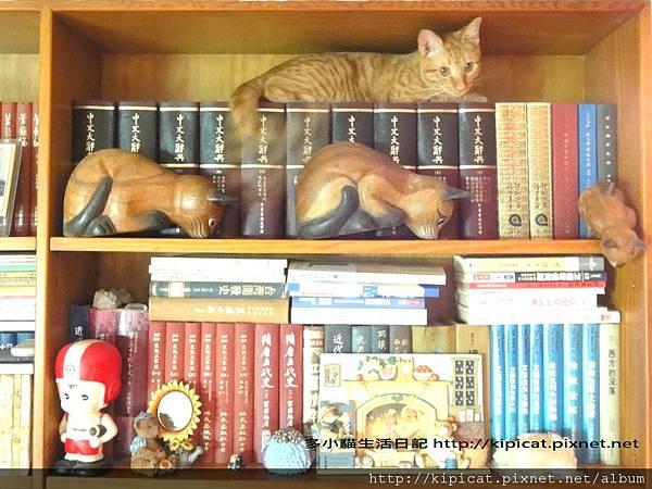 多小貓上書架裝木貓(多小貓生活日記)