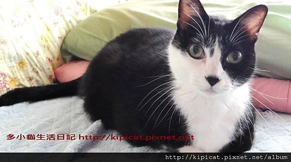 多小貓的皮皮哥哥(多小貓生活日記)