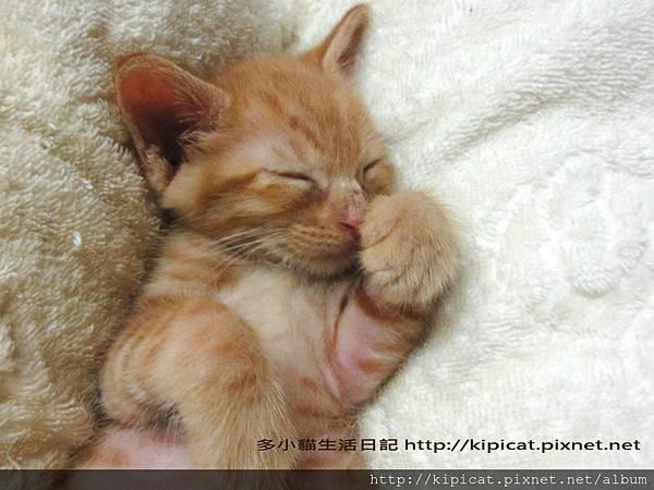 多小貓baby睡覺覺(多小貓生活日記)