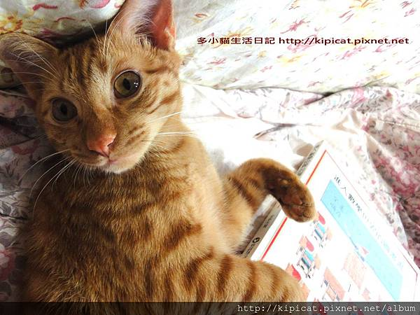 多小貓耍賴不看數學(多小貓生活日記)