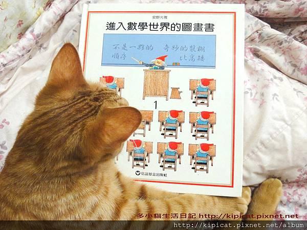 多小貓看書(多小貓生活日記)