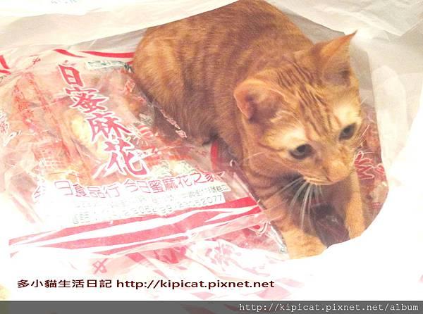 多小貓攻佔蜜麻花4部曲之3(多小貓生活日記)