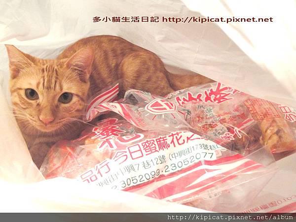 多小貓攻佔蜜麻花4部曲之 4(多小貓生活日記)