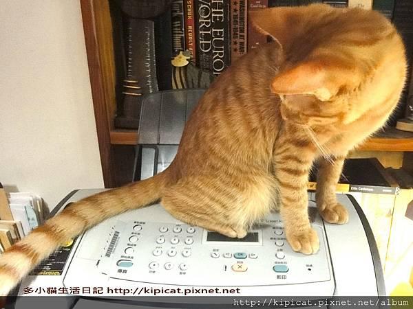 媽媽 印照片要按哪個鍵--多小貓生活日記