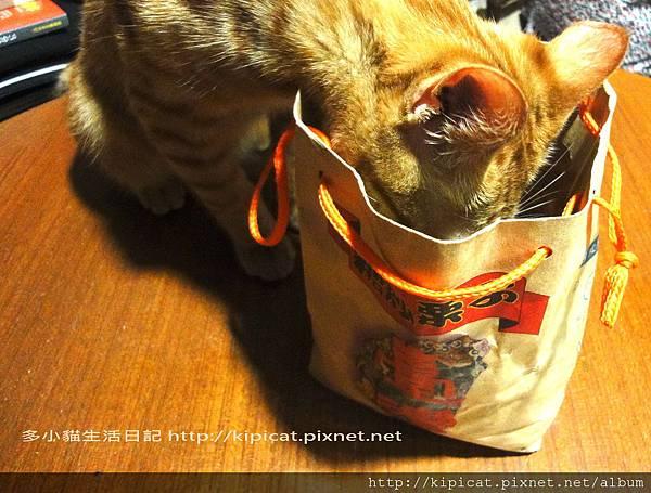多小貓吃糖炒栗子(多小貓生活日記)