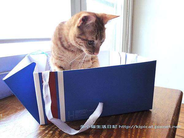 多小貓拆蛋糕盒之1(多小貓生活日記)