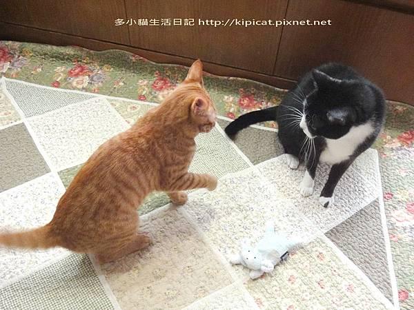 多小貓力護臭娃娃(多小貓生活日記)