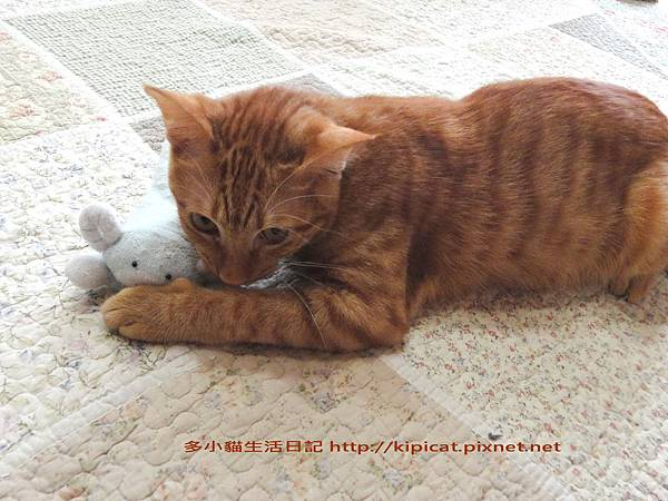 多小貓的寶貝娃1(多小貓生活日記)
