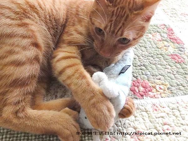 多小貓的寶貝娃2(多小貓生活日記)