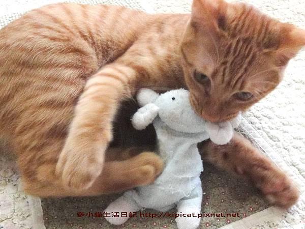 多小貓的寶貝娃3(多小貓生活日記)