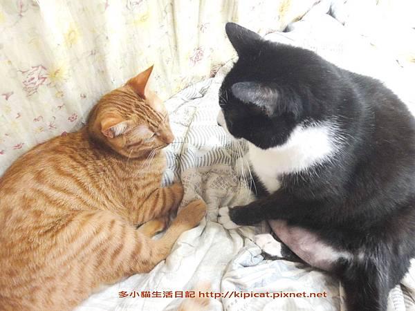 多小貓聽訓(多小貓生活日記)