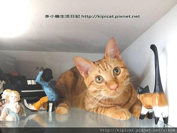 多小貓在這裡(多小貓生活日記)