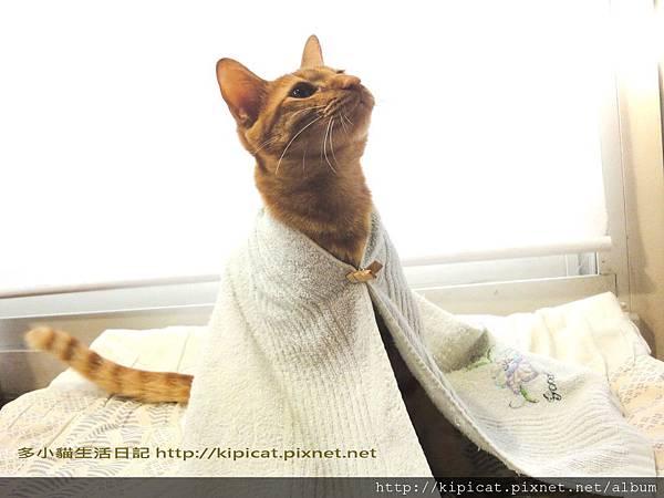 多小貓是白袍甘道夫(多小貓生活日記)