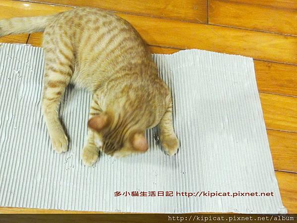 多小貓的新玩具 瓦楞紙一張1(多小貓生活日記)
