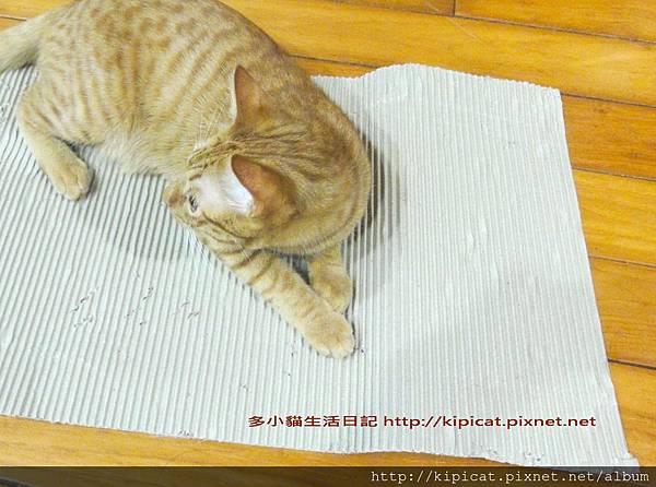 多小貓的新玩具 瓦楞紙一張2(多小貓生活日記)