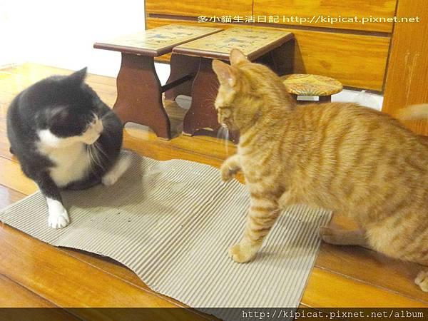皮哥 多小貓為瓦楞紙開戰1(多小貓生活日記)