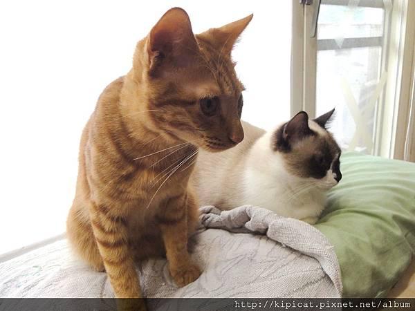 多小貓看媽媽在做啥2