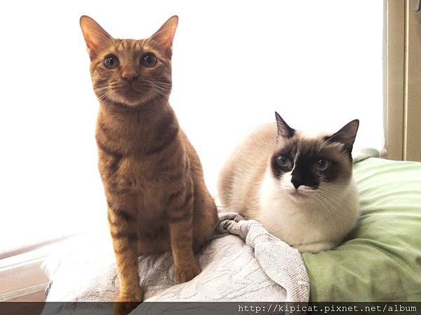 多小貓看媽媽在做啥1