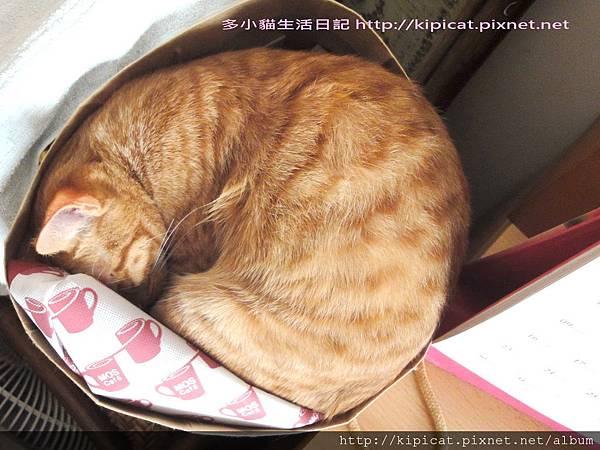 多多睡紙袋1(多小貓生活日記)