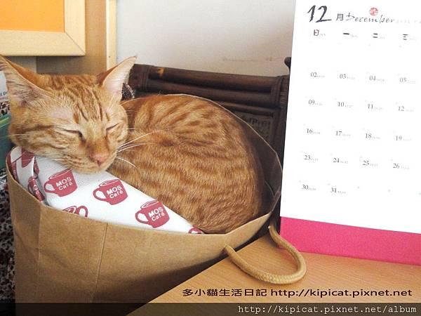 多多睡紙袋2(多小貓生活日記)