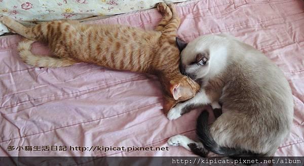 妮妮姐姐與多小貓1(多小貓生活日記)