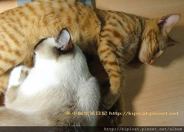 妮妮姐姐與多小貓2(多小貓生活日記)