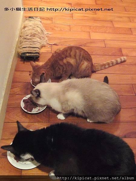 當我們吃在一起(多小貓生活日記)