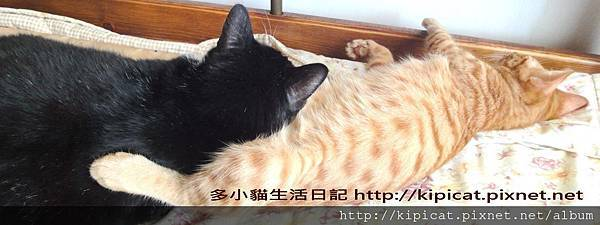 皮皮個個和多小貓2(多小貓生活日記)