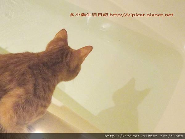多小貓發現水中怪物2(多小貓生活日記)