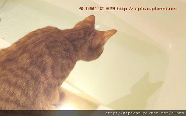 多小貓發現水中怪物1(多小貓生活日記)