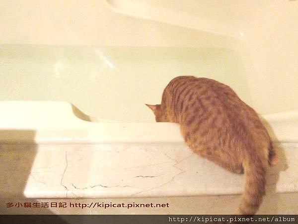 多多玩澡盆水(多小貓生活日記)