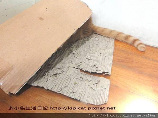 多小貓與瓦楞紙2(多小貓生活日記)