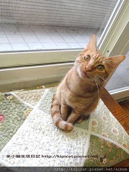 多小貓專心講話(多小貓生活日記)