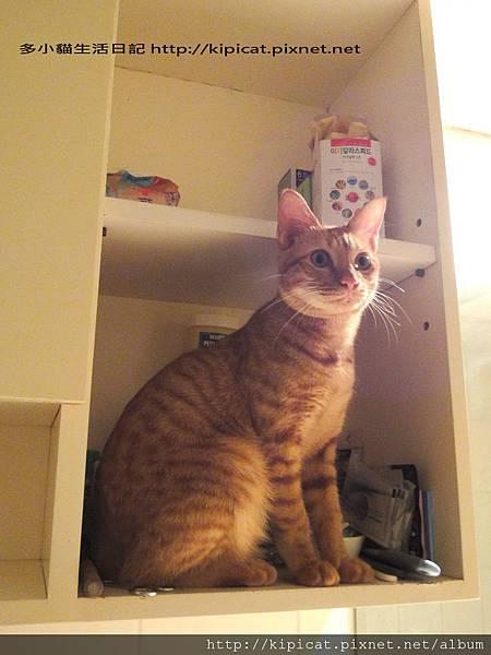 多多爬浴室置物櫃(多小貓生活日記)